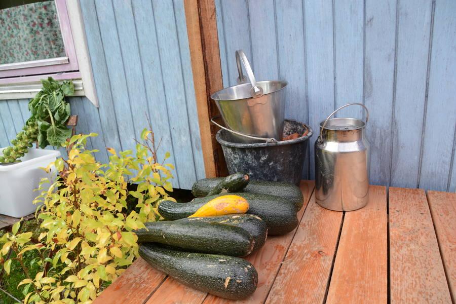 En del af årets høst i den store urtehave. Squash ligger klar ved Anna-Marie og Kurt Christensen skurvogn. Foto: Palle Søby
